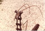 preying mantis head.jpg