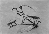 praying mantis with bug