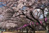 Kuroiso park, Tochigi