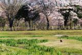 Naka_gawa riverside park, Tochigi