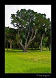 080714 Kingsley Plantation 4E.jpg