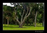 080714 Live Oaks 1C.jpg