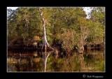 071112 Okefenokee Swamp 1E.jpg