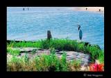 040530 Blue Heron 1E.jpg