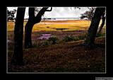 071108 Kingsley Plantation 8E.jpg