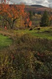 20071020-catskills-3927 - Version 2.jpg