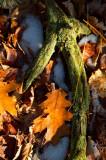 20071208-_MG_2948 - Version 2.jpg