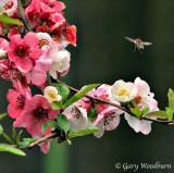flowers_4434.jpg