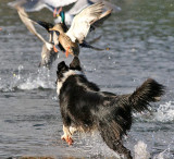 Running Wild in a Bird Santuary!