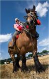 British Lady and Belgian horsepower