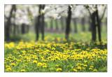*** Spring 2009 ***