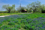 Karnes County Bluebonnets