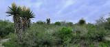 Yucca Flats 2010