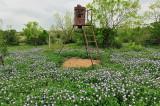 Ranch feeder, w/wildflowers