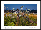 Queen Anne's Lace and Driftwood