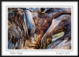 Driftwood Natures Design
