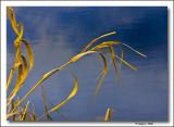Last Years Marsh Grass