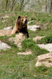 Bear (zoo image)