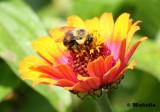 IMG_3437_Au jardin botanique.jpg