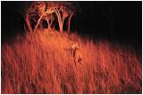 Night stalk, Gweru, Zimbabwe
