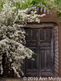 Doorway with lilac & wisteria