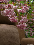 Pink blossoms and adobe