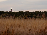 Chincoteague
