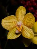 Biltmore Flowers