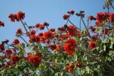 flowers _038.JPG