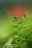 Plant Trough Pebbled Glass