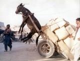 horsecart.jpg