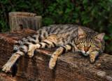 09 08 09 cat, Flash, Nikon D50.jpg