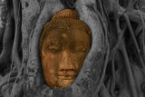 Buddha in tree history brush and brush tool cropped 2.jpg
