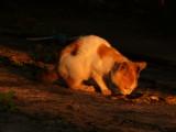 Cat Hsipaw.jpg