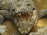 Croc up close and personal.jpg