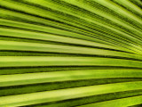 Green stripes.jpg