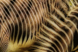 Zebra stripes 4.jpg