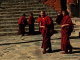 Adolescent monks