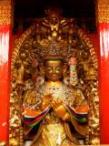 Golden at Zhongdian