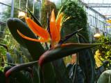 Hortus Botanicus 1