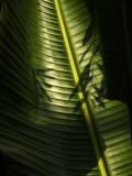 Hortus botanicus 2