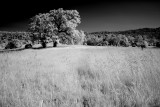 infrared_with_dp1