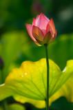 Flower Season in Summer