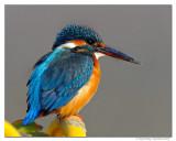Indian Birds-2010