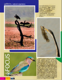 Fotowide-Oct 2009  @Bharatpur article