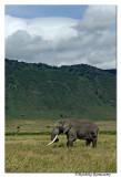 Elephant_D2X8490