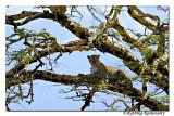 Leopard_DD31493
