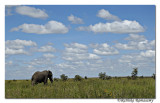 Lonely Elephent_D2X8298