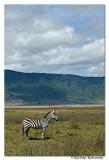 Zebra_D2X8550
