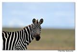 Zebra_DD30749